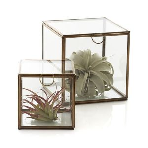 Brass and glass boxes from Crate and Barrel.